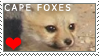 Cape Foxes Stamp by xKillingInTheName