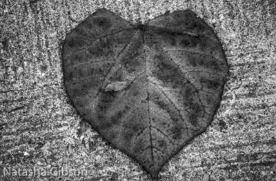 Heart by AlaizabelMarks