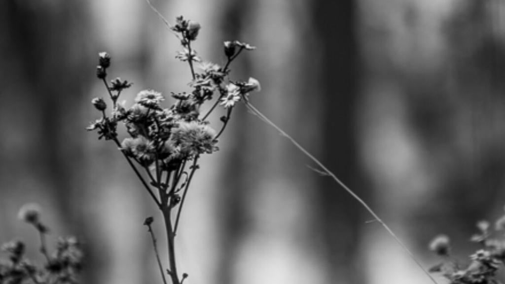 Flower by AlaizabelMarks