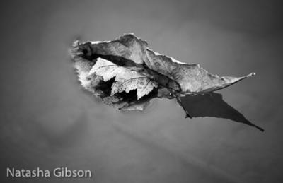 Pond Leaf by AlaizabelMarks