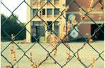Rami secchi, dietro i cancelli