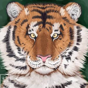 Tiger - Semi-Re Style