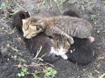 Four Little Kitties.