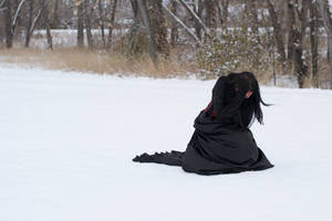 Winter Stock by Vinobia