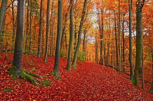 Autumnal air