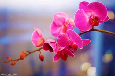 Violet orchid 30_366 by eugene-dune