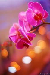 Violet orchid 31_366 by eugene-dune
