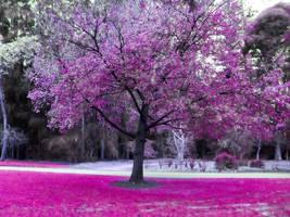 Pink Oak