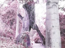 Archway Tree