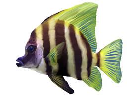 Scientific Illustration: Fish by muffin-wrangler