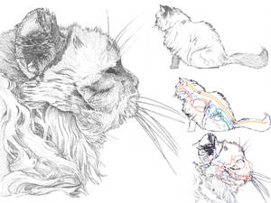 Scientific Illustration: Cat
