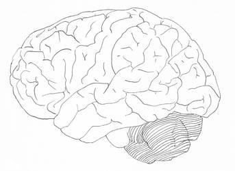 Stock Brain by muffin-wrangler
