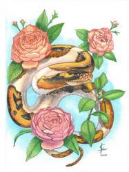 Python and Camellias