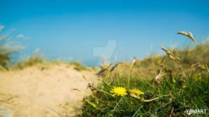 walney beach