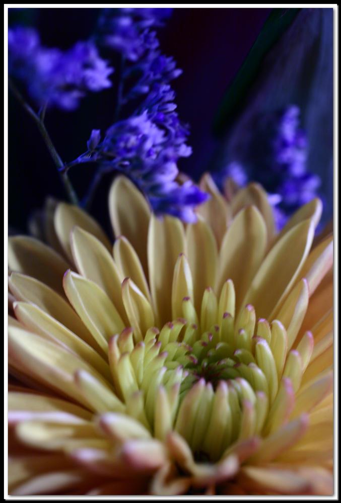 Disco Flower 2 by killersnowman