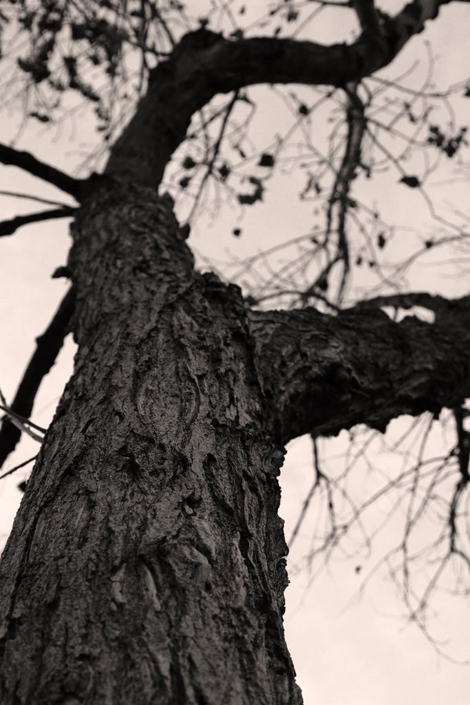 Gnarled Tree by killersnowman