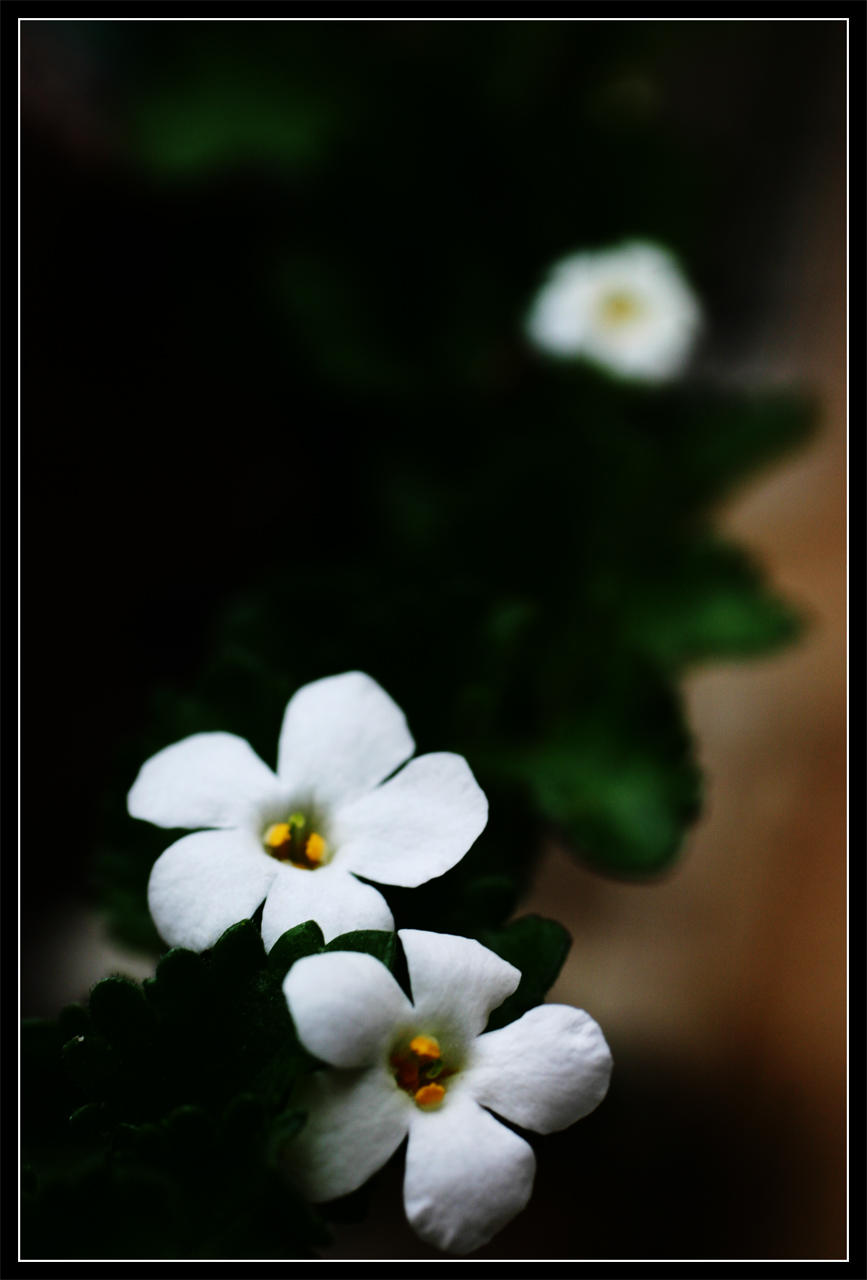 Flower 5.2 by killersnowman