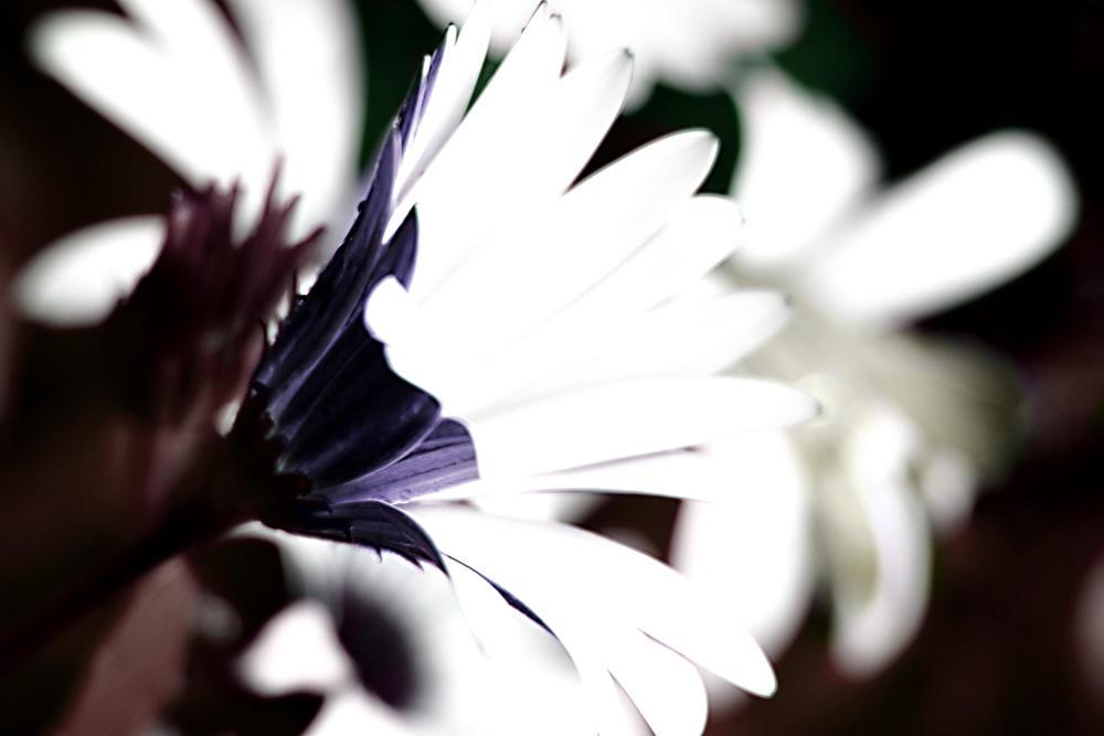 Flower $ by killersnowman