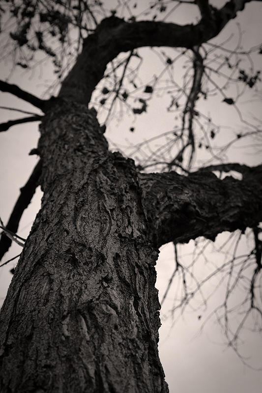 Gnarled Tree - remake by killersnowman