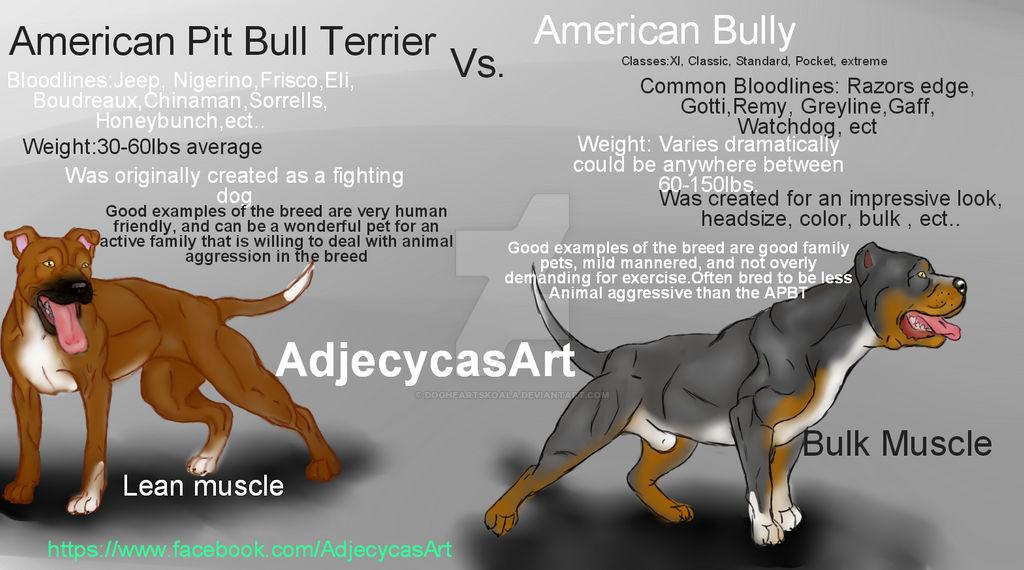 Pit Bull Vs American Bully Breed