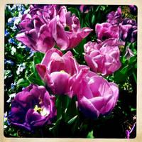 Spring Bouquet by ZandyPop
