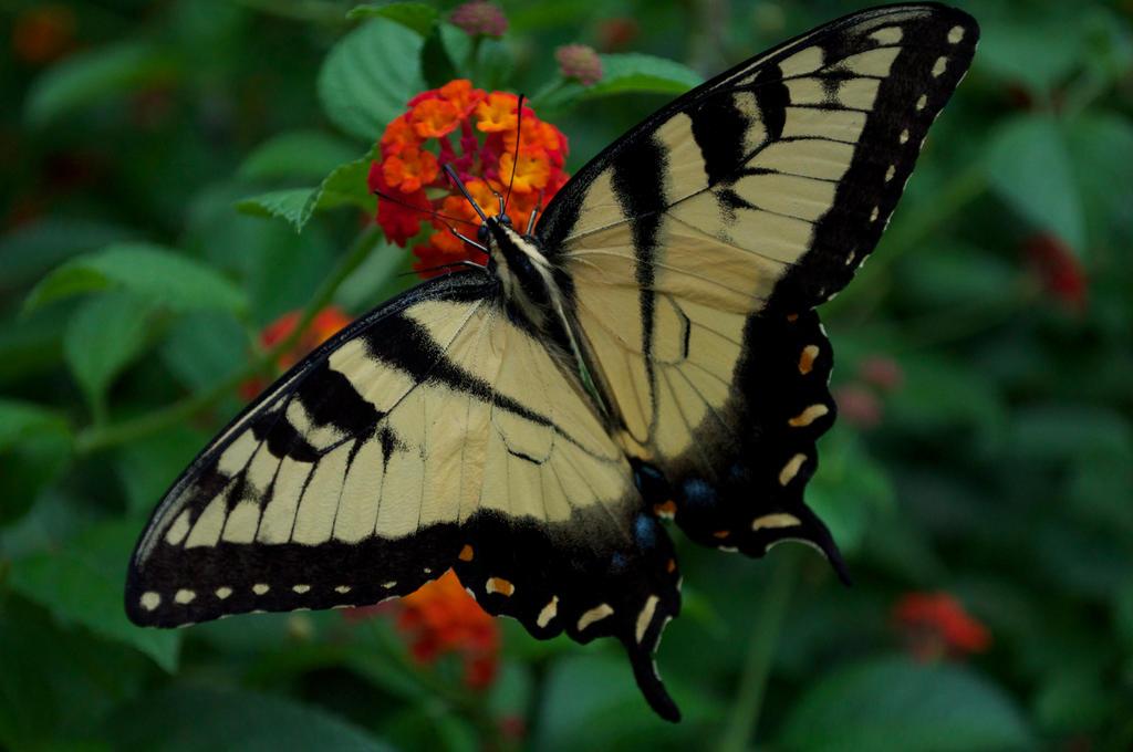 Flower Tiger by ZandyPop