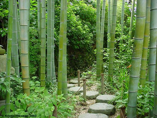 Through The Bamboo Garden By Soundinnovation On Deviantart