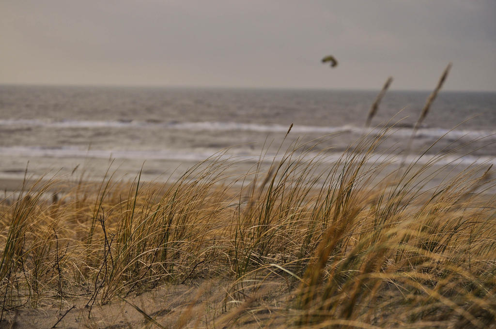 beach_landscape_by_neurologics-d78ng06.j