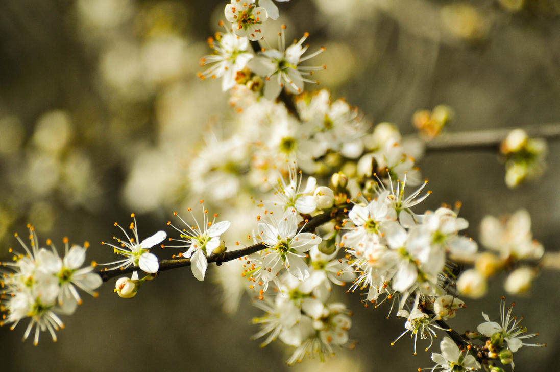 macro_blossom_by_neurologics-d7at5qi.jpg