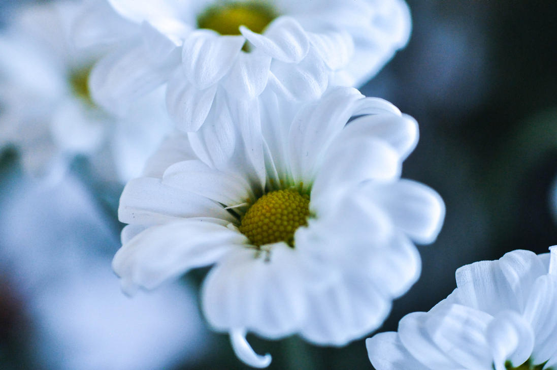 flowers_by_neurologics-d7i3a9i.jpg