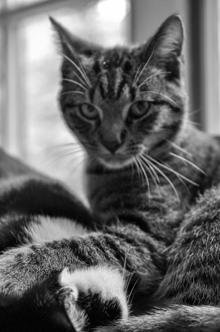 dominating_cat_by_neurologics-d86lrk7.jp