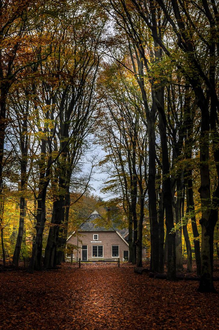 autumn_by_neurologics-d86ls3v.jpg