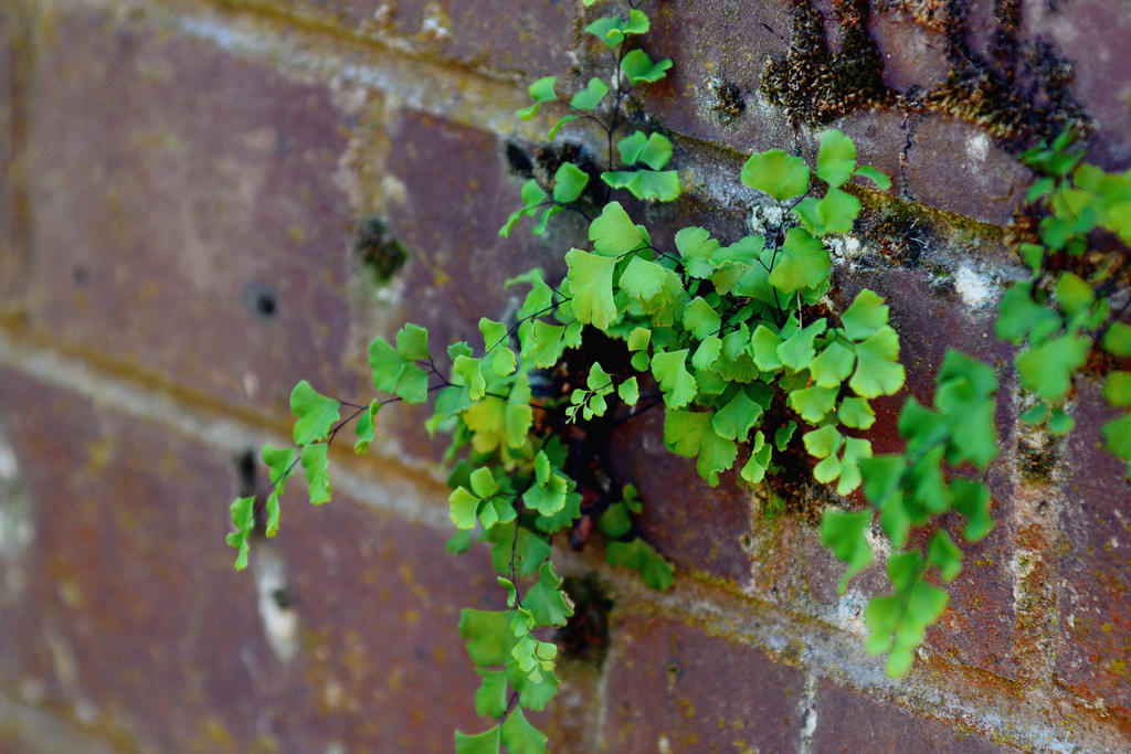 Little Greeny @ Corner by Candilux