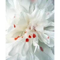 Bleeding Flower by Wtex