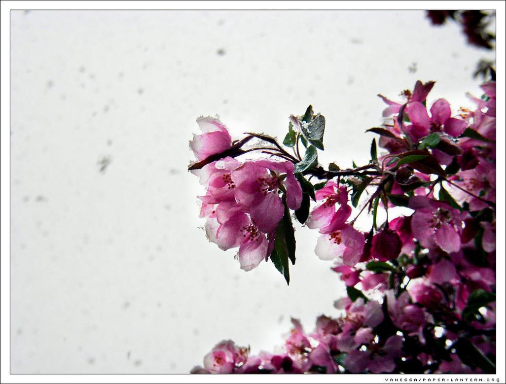 Frozen Flowers by Anessa on DeviantArt