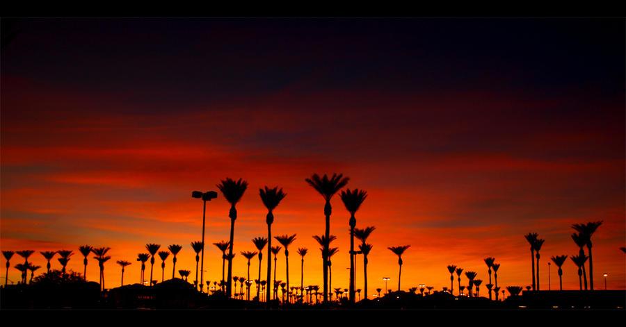 http://fc01.deviantart.com/fs21/i/2007/294/d/0/Sunset_Palms_by_Swanee3.jpg