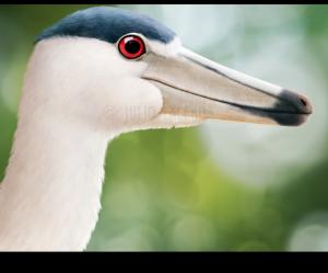 BaryonyxAeygyticus's Profile Picture