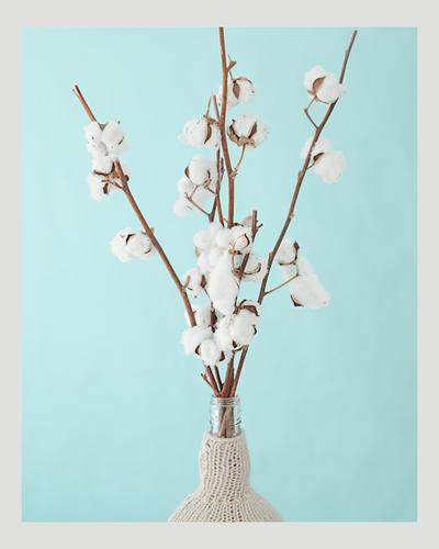 cotton by xutomu