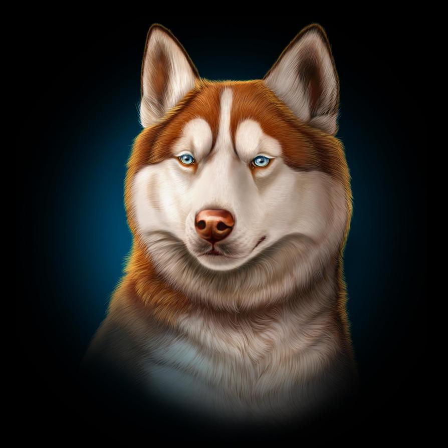 Siberian Husky by Seaff