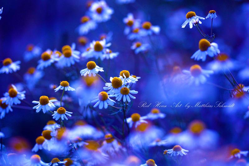Blue Summer Hour by StrayDog1972