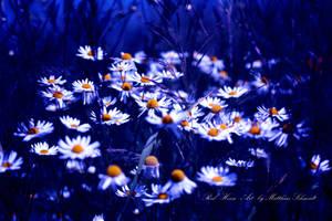 Midsummer Night Dream by StrayDog1972