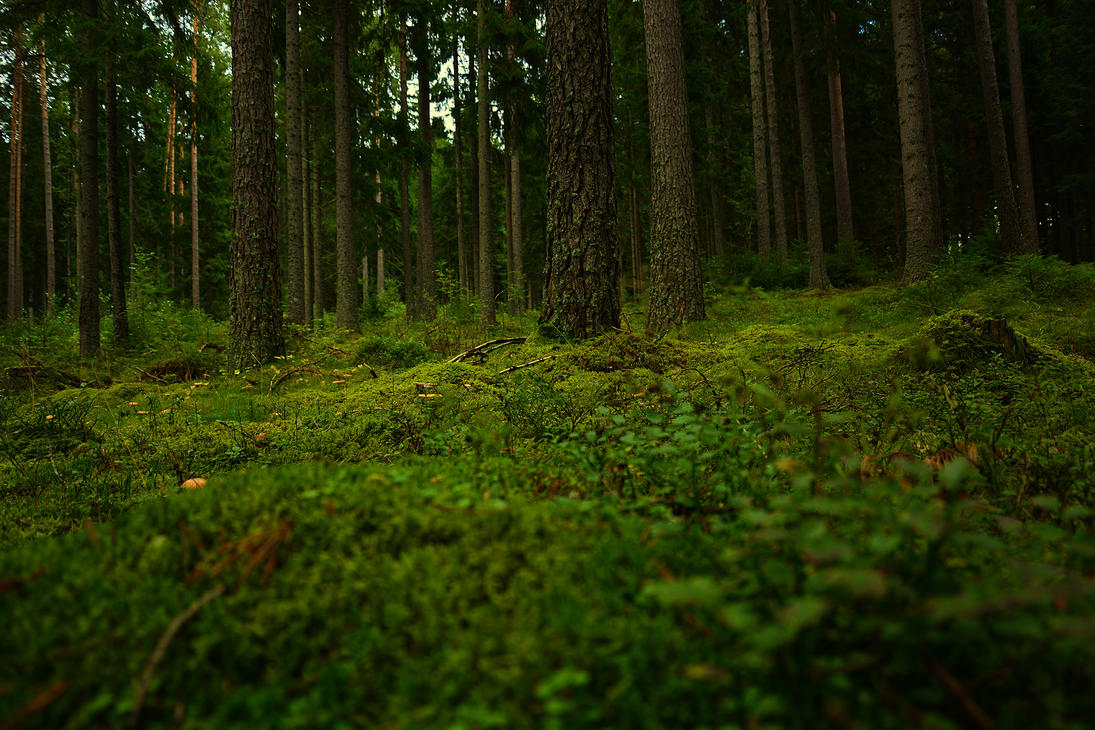 Woods of Bottnaryd by BrocX