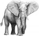 Sketchy Elephant