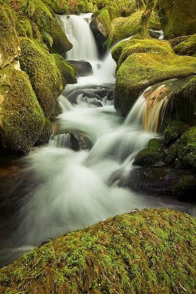 River Nemesis by Alex37