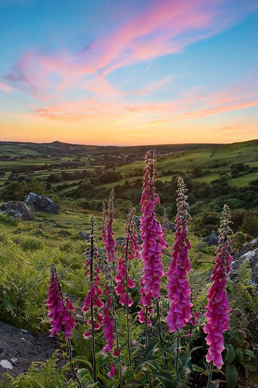 Devon Wildflowers by Alex37