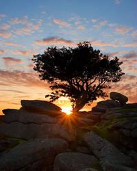 Under the Hawthorn tree by Alex37
