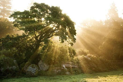 Oak Sunshine