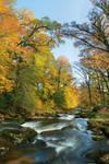 Walkham Autumn
