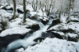 Colly Brook Snow