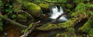 Rainforest, Devon